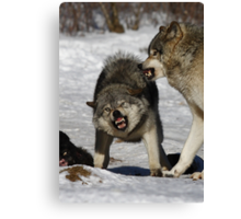 Back off! - Timber Wolf Canvas Print