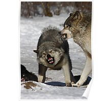 Back off! - Timber Wolf Poster