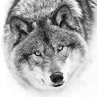 Wolf Eyes - Timber Wolf by Jim Cumming