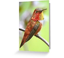 My Rufous Friend Greeting Card