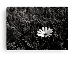 individualism Canvas Print