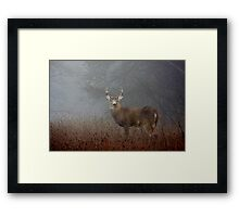 Big Buck - White-tailed deer Framed Print