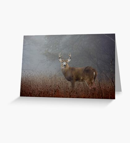 Big Buck - White-tailed deer Greeting Card