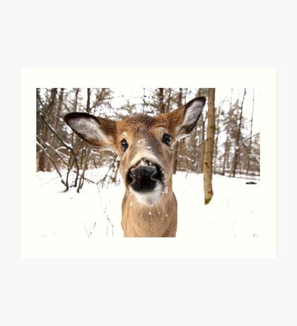 Nosey - White-tailed Deer Art Print