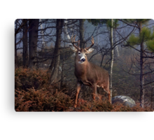 Buck on ridge - White-tailed Deer Canvas Print