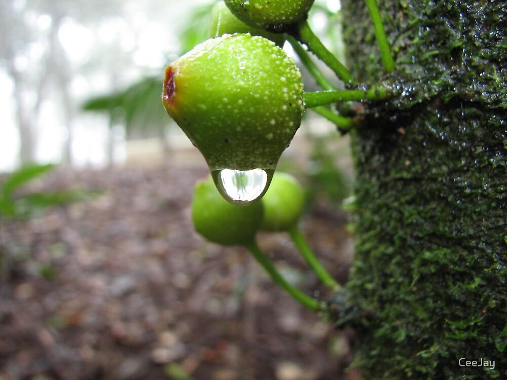 Raindrop by CeeJay