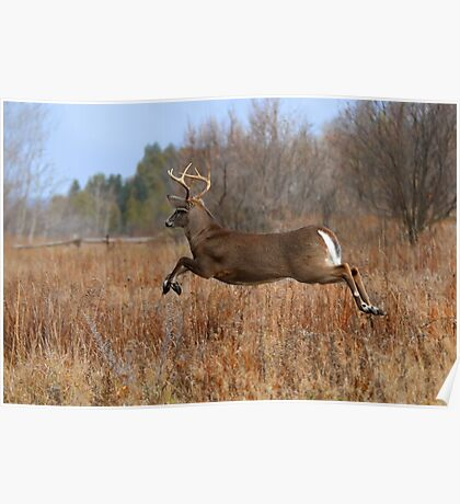 Through the Air - White-tailed deer Buck Poster