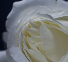 A Rose By Any Other Name... by James Ottaway