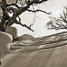 Niseko Powder Fields II by Robert Mullner