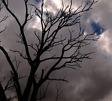 Cold Tree VII by Michael Naylor