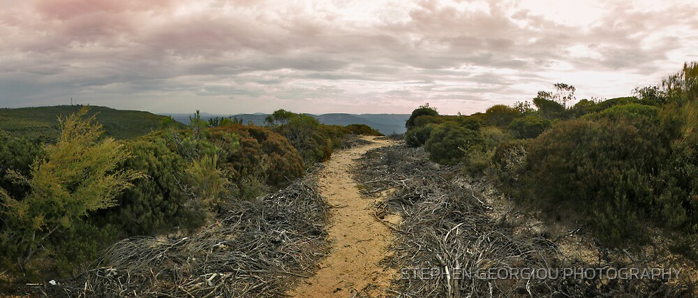 Kings Tableland track near Wentworth Falls in the Bluemountains by STEPHEN GEORGIOU PHOTOGRAPHY