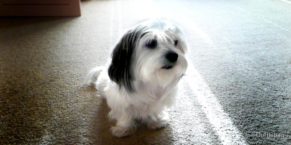 My Dog by Dufflebag