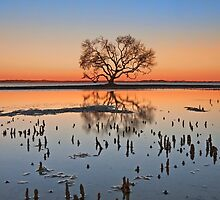 Winter Dusk - Victoria Point Qld Australia by Beth  Wode