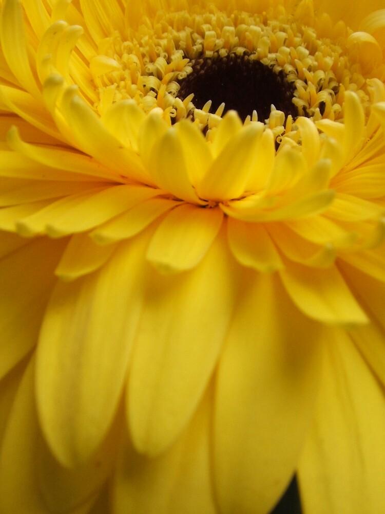 glorious yellow by firofotos