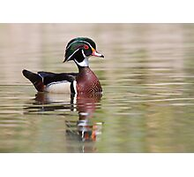 Silky Waters - Wood Duck Photographic Print