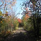 Country Path by Martha Medford