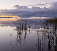 Whispers on Lake Cootharaba by Barbara Burkhardt