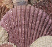 Sea Shells Card  by MidnightAkita