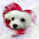 Snowdrop the Maltese - Forever in my Heart by Morag Bates