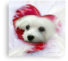 Snowdrop the Maltese - Forever in my Heart Metal Print