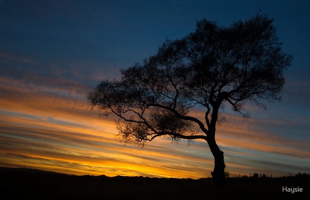 Sunset by Haysie