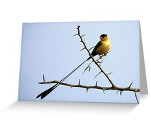 Shaft-Tailed Wydah Triangle Greeting Card