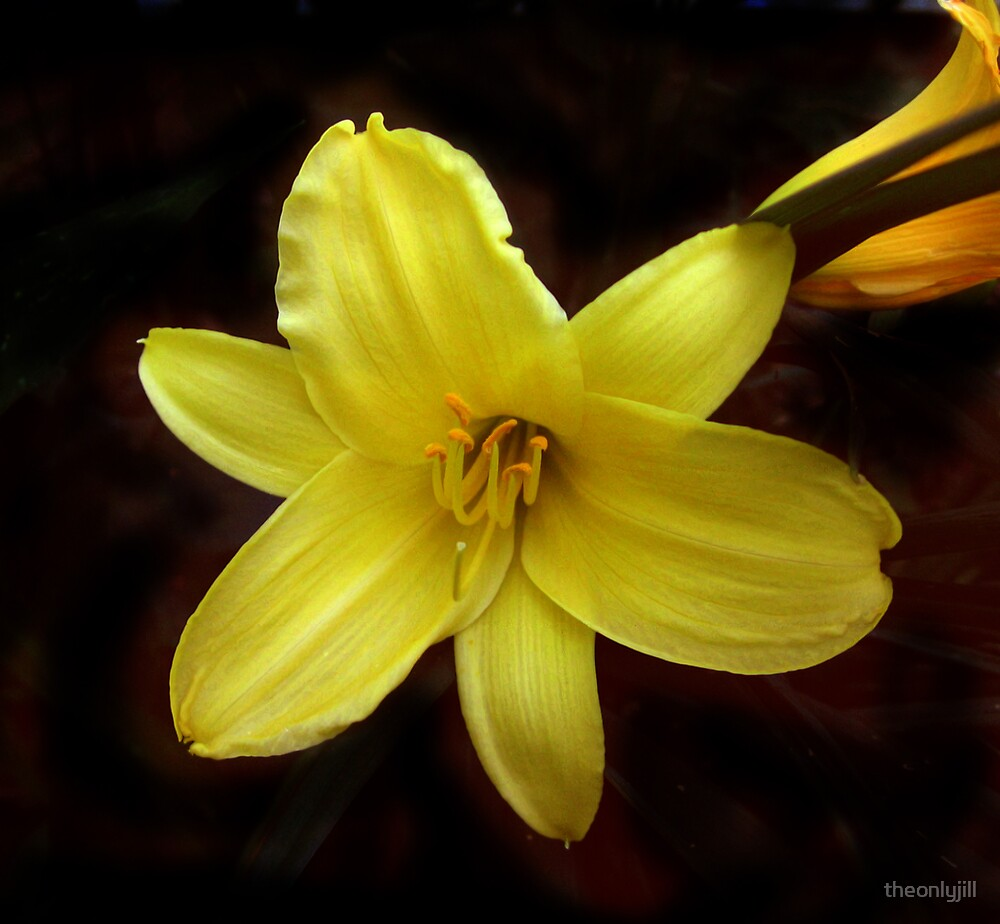 Yellow Lilly by theonlyjill