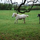 WHITE HORSE ,COME BACK by TIMKIELY
