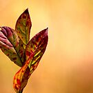 Autumn Leaves by photomama4