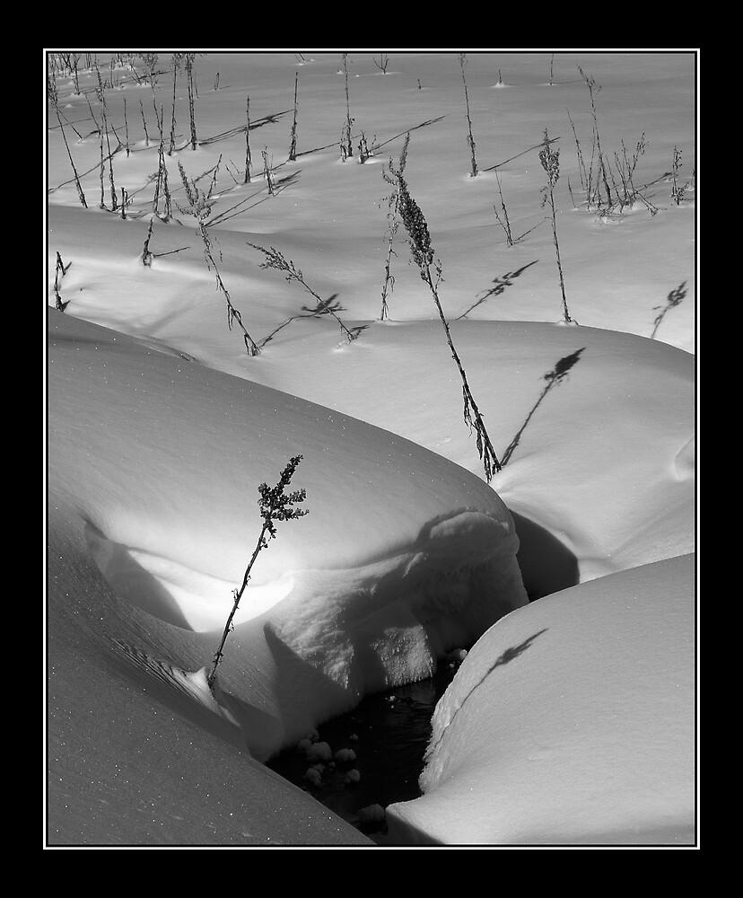 Snow Scene by mymamiya