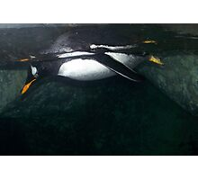 under water Photographic Print