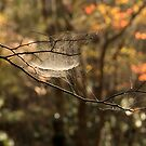 Tangled Web by Gary L   Suddath