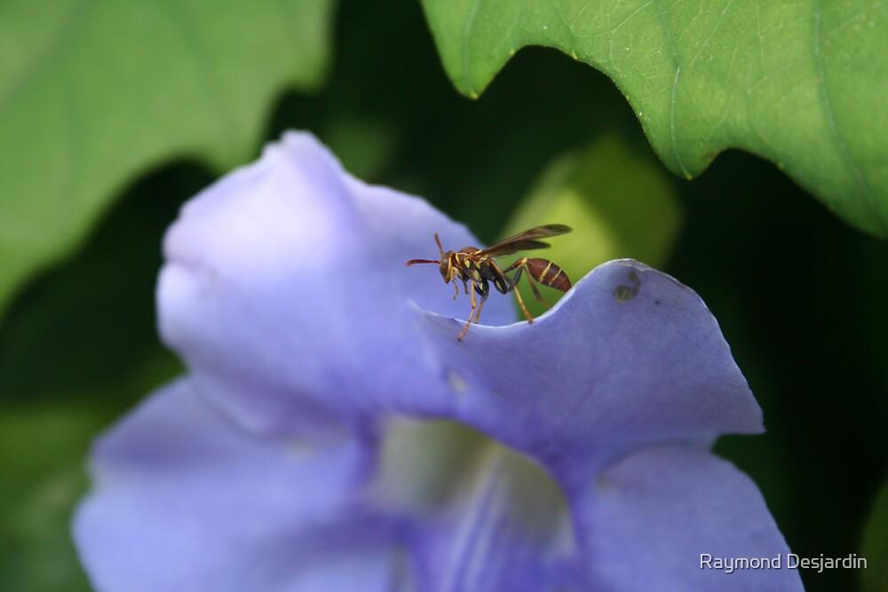 bee on flower by Raymond Desjardin