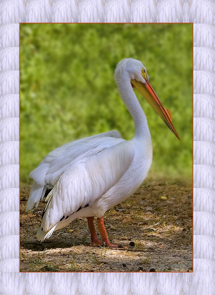 White Pelican Greeting Card by Delores Knowles
