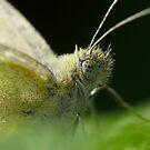 Green eyed Devil by Geoffrey