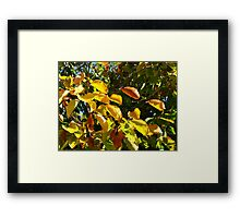 Sunlit Leaves of Russet and Green Framed Print