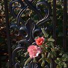 Two Flowers by © Joe  Beasley IPA