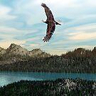 Lone Eagle by Walter Colvin