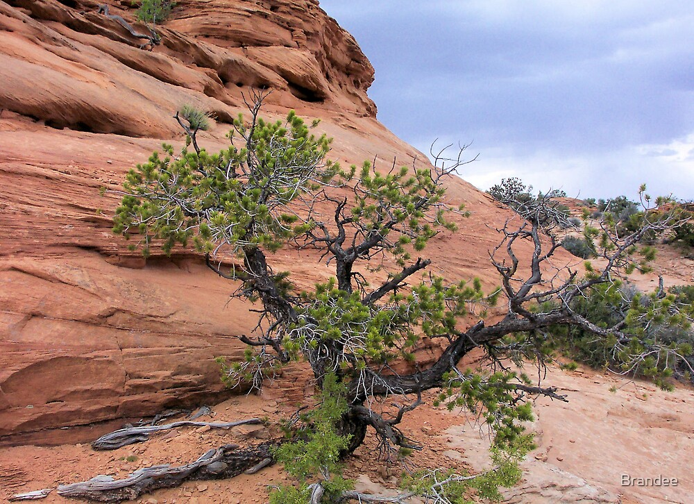 Funny looking tree in Moab by Brandee