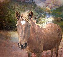 Wild Dreamer by Susan Werby