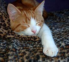 snoring  by Els Steutel