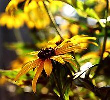 Yellow Flowers by Kimberly Sharpe