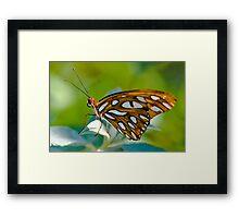 Agraulis Vanillae,Gulf Fritillary Butterfly Framed Print