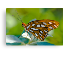 Agraulis Vanillae,Gulf Fritillary Butterfly Canvas Print