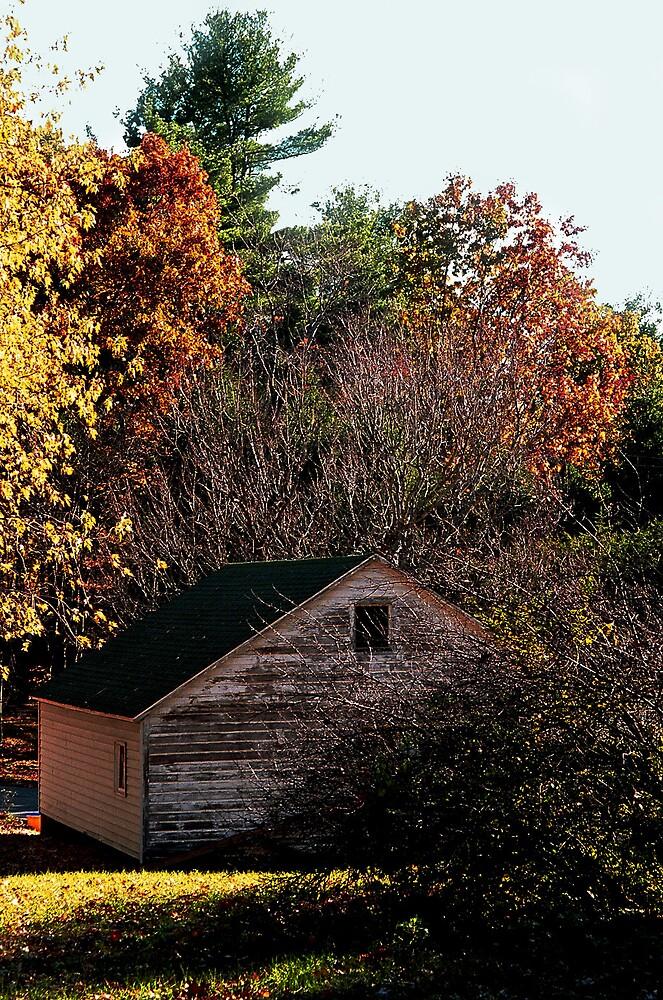 Fall Yard by Kimberly Sharpe
