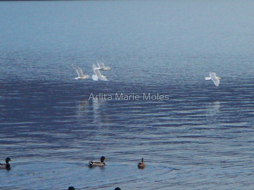 Gulls  by Arlita Marie Moles