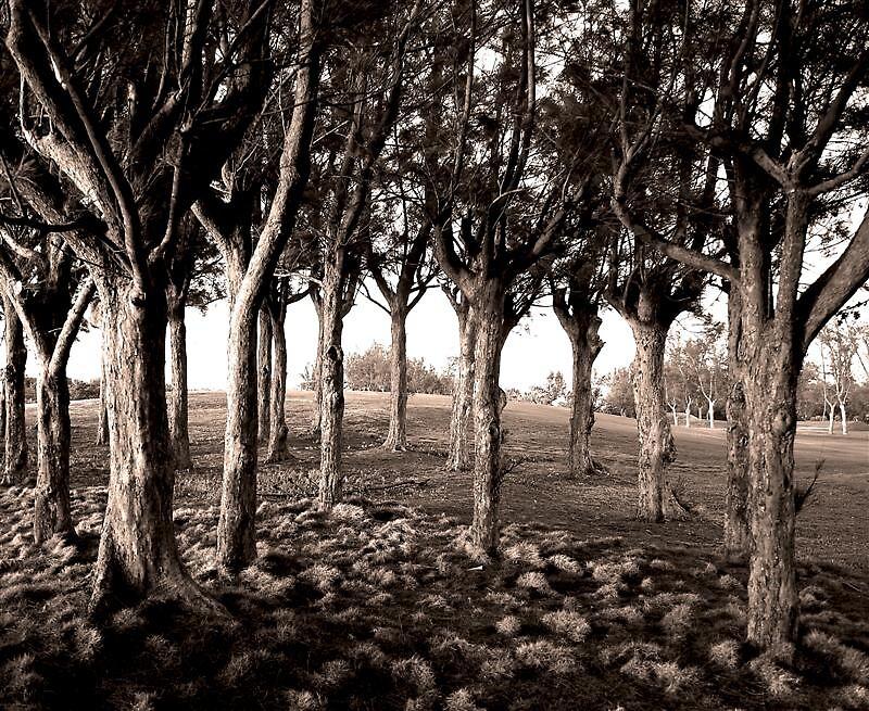Trees by imeaj
