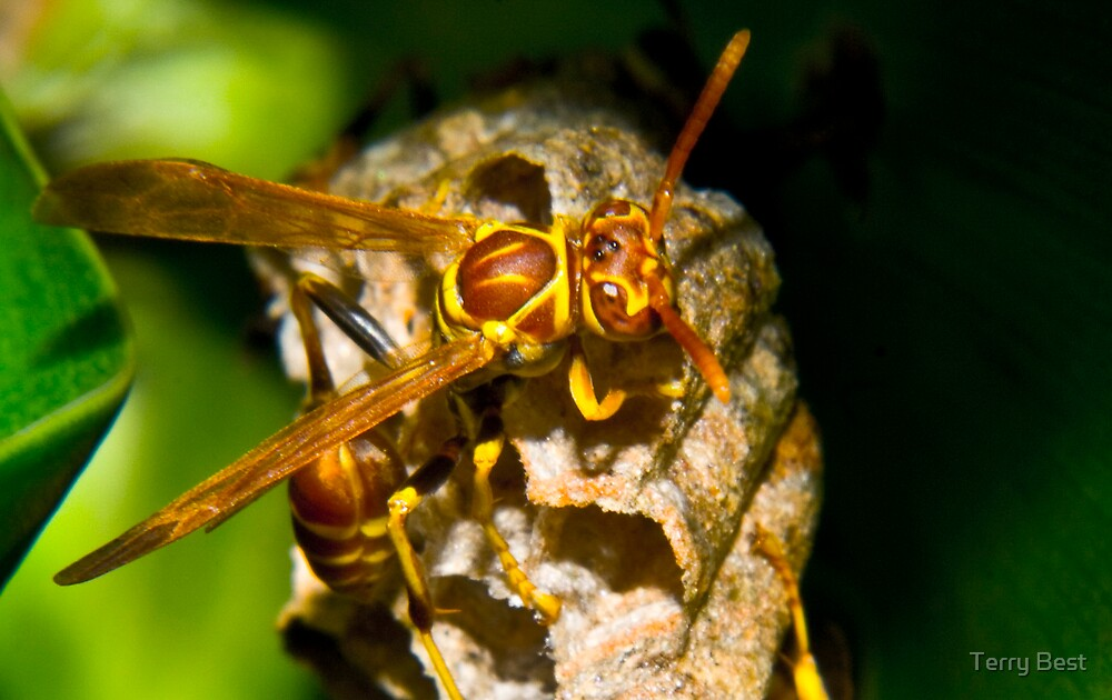 Wasp by Terry Best
