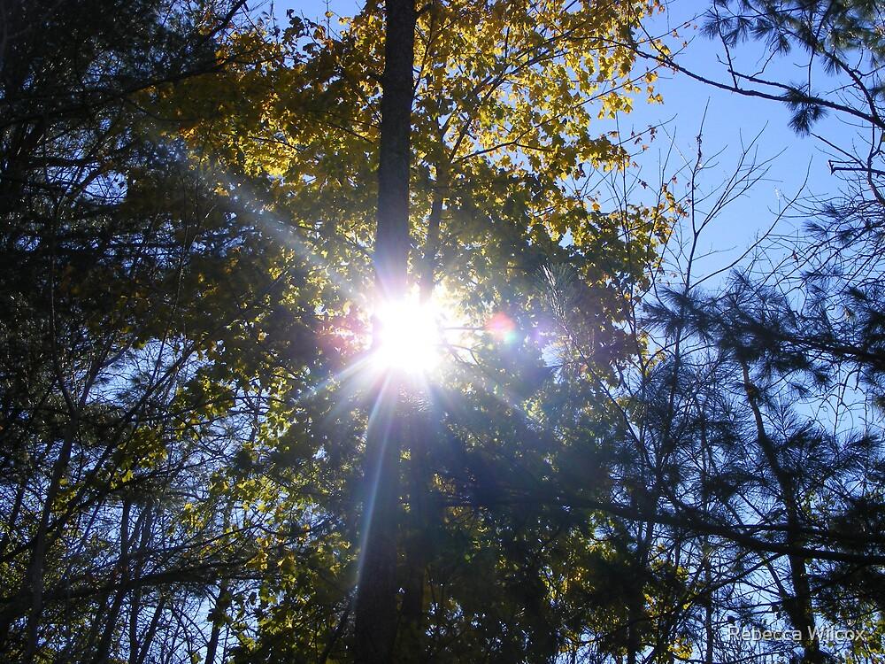 Shining Through by Rebecca Brann