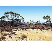 Atop Mt Duwul Photographic Print